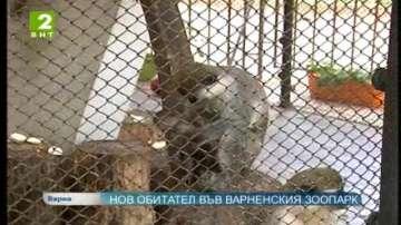 Нов обитател във варненския зоопарк