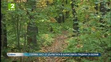 Голяма част от дърветата в Борисовата градина са болни