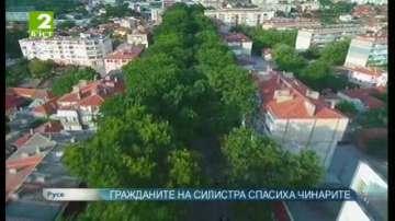 Гражданите на Силистра спасиха чинарите
