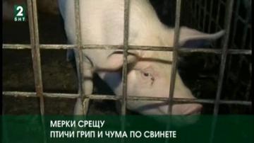 Мерки срещу птичи грип и чума по свинете
