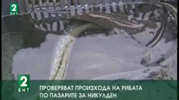 Проверяват произхода на рибата по пазарите за Никулден