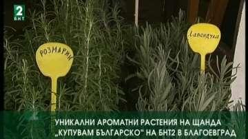 """Уникални ароматни растения на щанда """"Купувам българско"""" на БНТ 2 в Благоевград"""