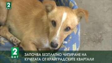 Започва безплатно чипиране на кучетата от крайградските квартали