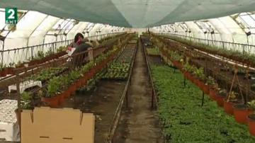 Производители на цветя искат субсидии от държавата