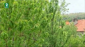 Опасност от измръзване на овошките в Северна България заради рязкото застудяване