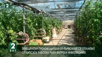 Земеделски производители от Първомай се оплакват от липсата работна ръка