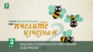 Над 50% е смъртността при пчелите тази пролет