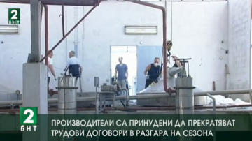 Производители са принудени да прекратяват трудови договори в разгара на сезона