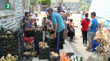 Много хора от Белица се изхранват от бране на гъби, билки и горски плодове
