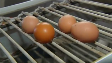 Партида от 500 килограма яйчен прах с фипронил е получена и в България