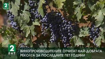 Винопроизводителите отчитат най-добрата реколта за последните пет години