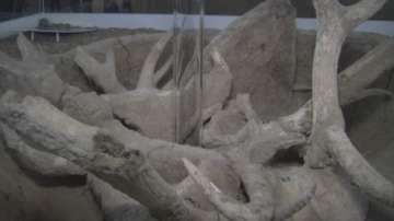 Представители на най-старата човешка цивилизация са живели във Врачанско