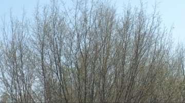 Вредители унищожават растителността във Врачанския Балкан