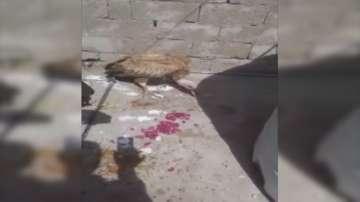 """Бял лешояд с чип от България беше """"арестуван"""" в Йемен"""