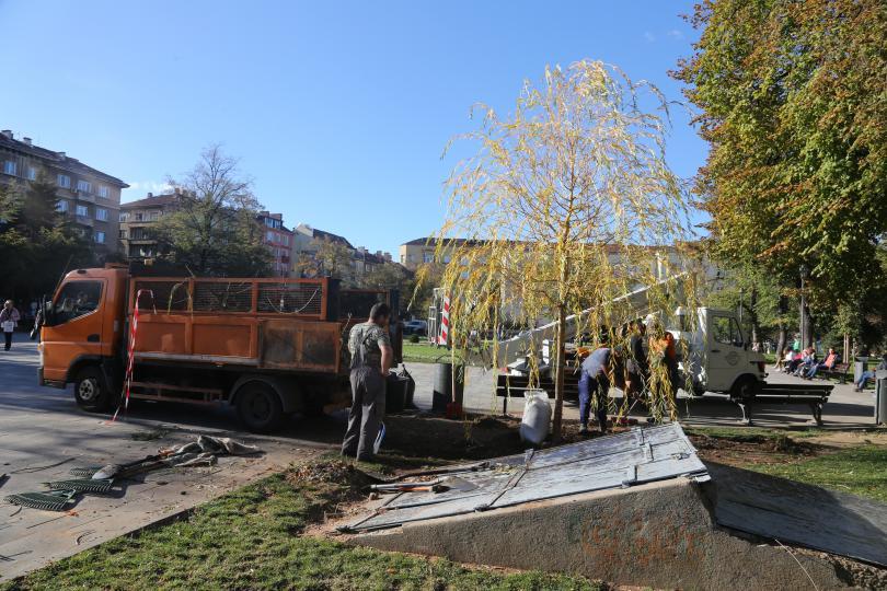 снимка 1 Пред Св. Седмочисленици вече има нова върба