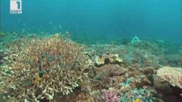 ДРУГИТЕ новини: Облаците в защита на Големия бариерен риф