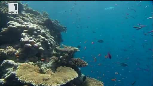 Театърът като убежище, тестват противослънчева емулсия за Големия бариерен риф,