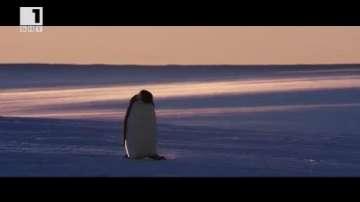 ДРУГИТЕ новини: Кино и природа