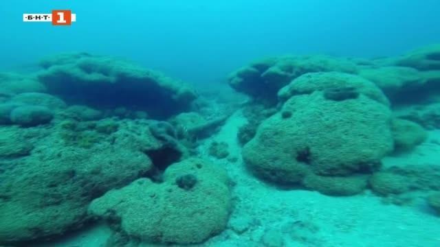 Температурни рекорди посрещат пролетта,, откриха нов коралов риф в Адриатическо