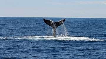 Хор във Великобритания пресъздава пеенето на китовете