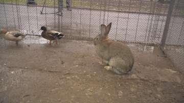 Щастлива развръзка за част от откраднатите животни от зоокъта в Перник
