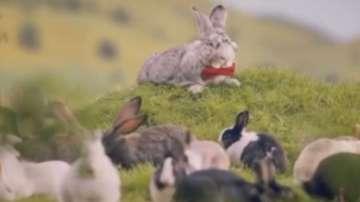 Полша насърчава раждаемостта с клип, в който дава за пример зайците