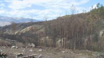 Започна залесяването на опожарените гори над Кресна
