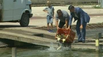 Като за световно: пуснаха 1 тон шаран в Гребната база в Пловдив