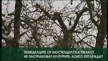 Земеделците от Кюстендилска област не застраховат културите, които отглеждат