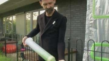 Зелена светлина: Завеси от водорасли