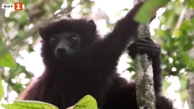 Същинска ирония на съдбата - един от най-застрашените от изчезване