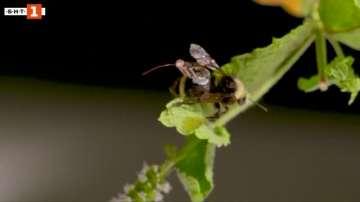 Зелена светлина: Пчели с раници