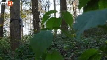 Зелена светлина: уред разчита езика на растенията