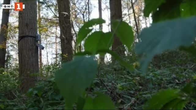 Снимка: Зелена светлина: уред разчита езика на растенията
