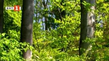 Зелена светлина: Тайният живот на дърветата