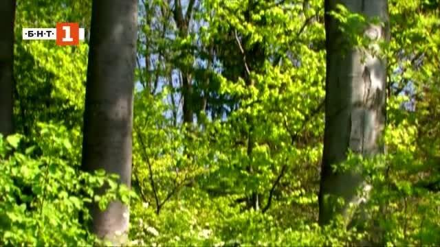 Снимка: Зелена светлина: Тайният живот на дърветата