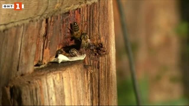 Пчели се хранят с хартия. Не, не става въпрос за