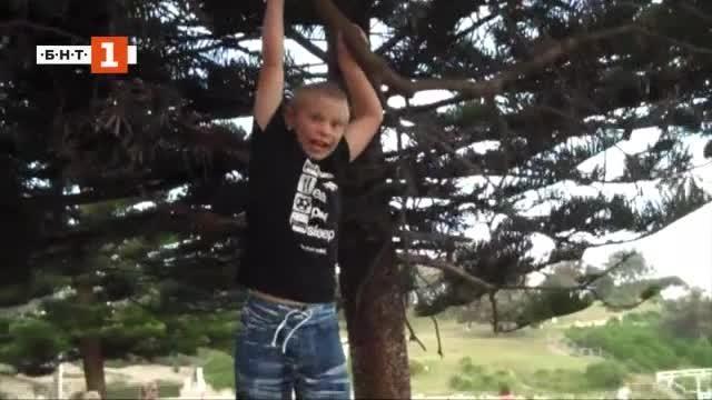 """Снимка: Зелена светлина"""": Защо обичаме да се катерим по дървета?"""