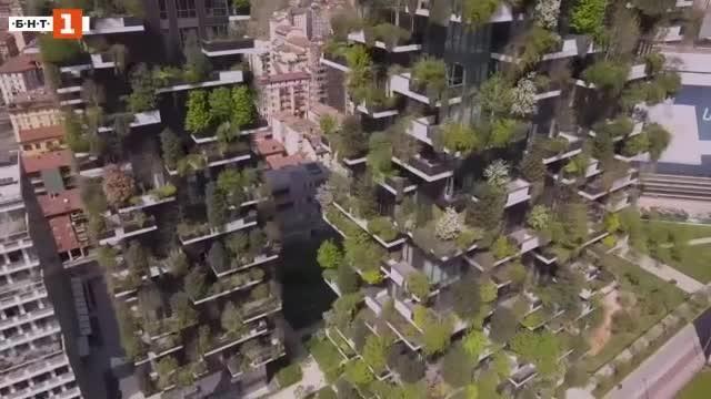 Да живееш в гора. Градска. Такава, която се е сраснала
