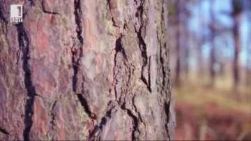 Зелена светлина: Дърво като... стомана