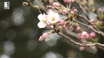 Зелена светлина: Защо японците остаряват бавно и живеят дълго?