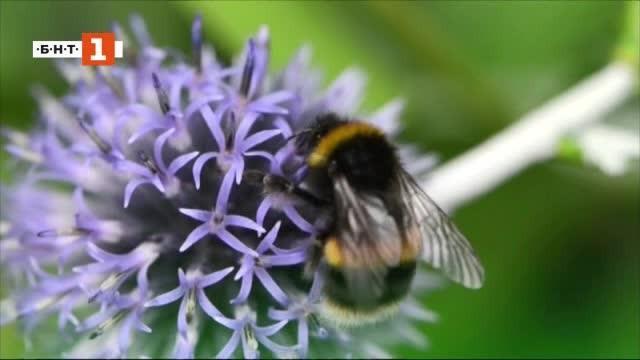 Снимка: Зелена светлина: Магистрала за... пчели в Норвегия