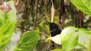 Зелена светлина: Незрящият, който вижда птиците