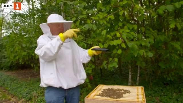 Изкуственият интелект може да спаси пчелите от изчезване. Идеята е,