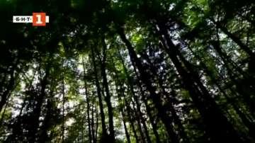 Зелена светлина: Живата катедрала на Маури