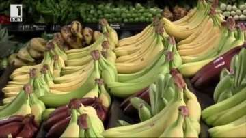 Зелена светлина: Панели от бананови стебла