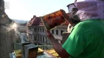 Зелена светлина: Пчели на покрива