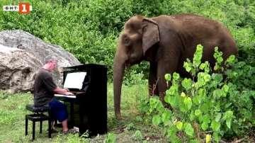 Зелена светлина: Музика за слонове