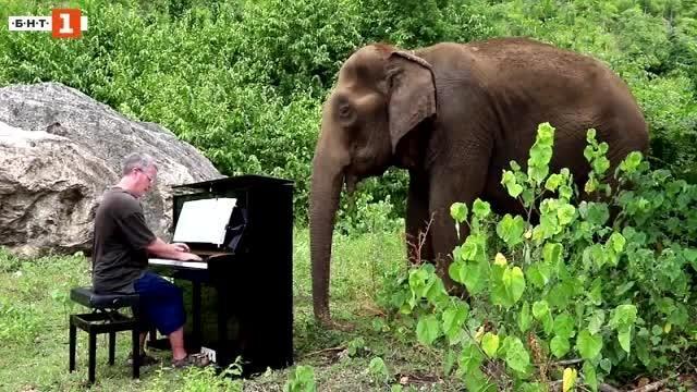 Познават го заради музиката. Повечето отдавна са загубили зрението си