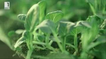 Зелена светлина: Вертикалните ферми на градовете